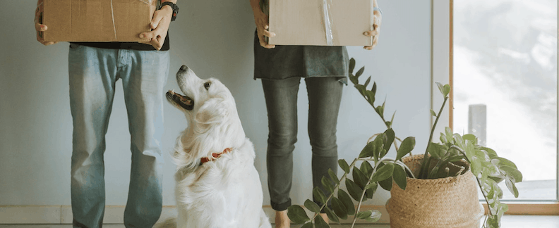 Everything You Need to Know About Renting With Pets